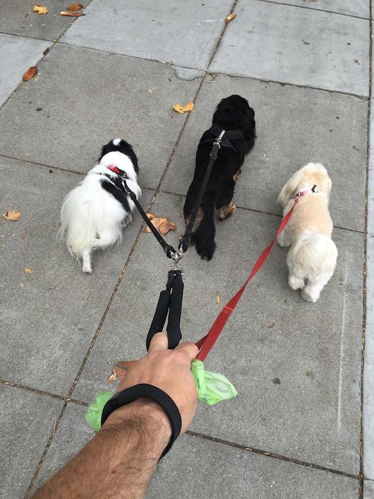 walk-dogs